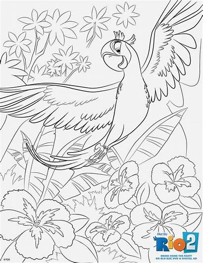 Coloring Rio Pages Macaw Sheets Scarlet Dvd