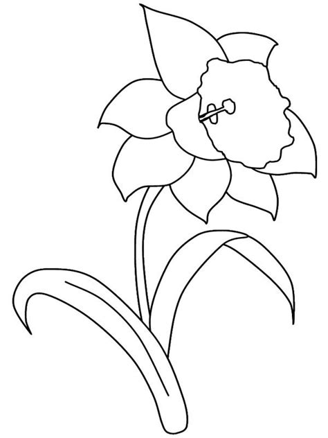 daffodil flower   garden coloring page color luna
