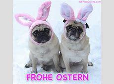 ᐅ Lustiges zu Ostern Bilder Lustiges zu Ostern GB Pics
