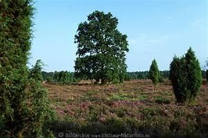 Rosa Blühender Baum Im Frühling : b ume bl hender heidelandschaft foto gr ne pflanzen baum ~ Lizthompson.info Haus und Dekorationen