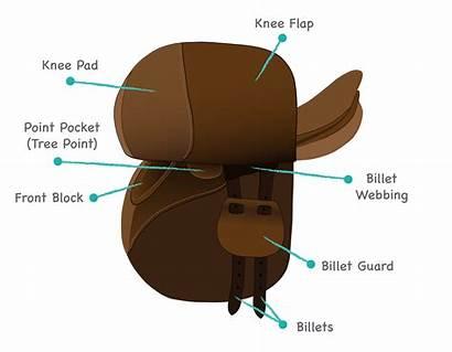 Saddle Parts Types Under Flap Identify Horse