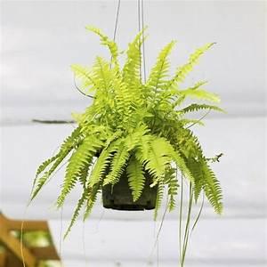 Plante Verte Salle De Bain : 10 plantes assainissantes liste ooreka ~ Melissatoandfro.com Idées de Décoration