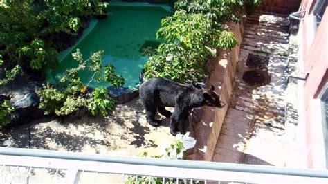 zoo japanese
