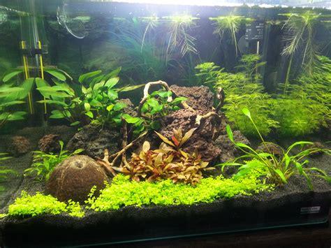 acheter du verre pour aquarium pourquoi le cuivre est toxique pour les crevettes