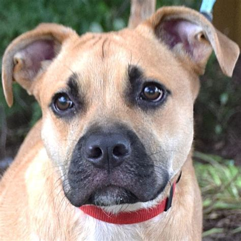 animal house huntley find a to adopt or foster animal house shelter