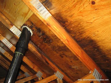 moisissure mur chambre beau moisissures dans les maisons