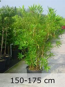 Kübelpflanzen Winterhart Bilder : duftende gartenpflanzen verw hnen die nase mit den unterschiedlichsten duftnoten fragen ~ Markanthonyermac.com Haus und Dekorationen