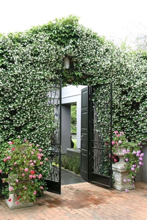 Decor Ideas For Kitchens - growing jasmine sa garden and home