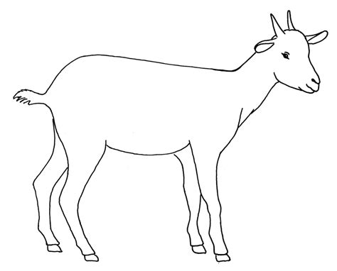 goat drawing simple     ayoqqorg