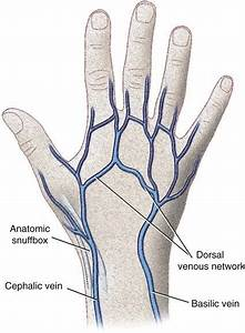 Why Do We See Our Veins Blue