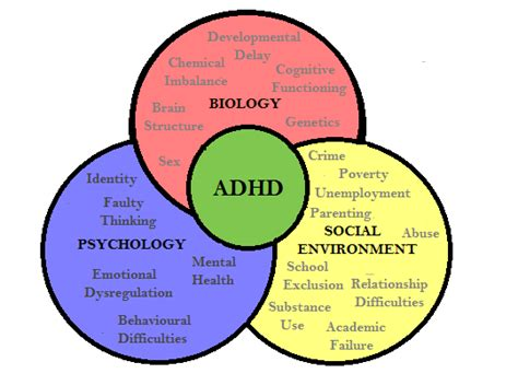 Diagram Of Adhd by How Effective Is Current Adhd Practitioner In