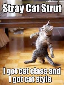 stray cat strut stray cats stray cats 1981 anothersicknote