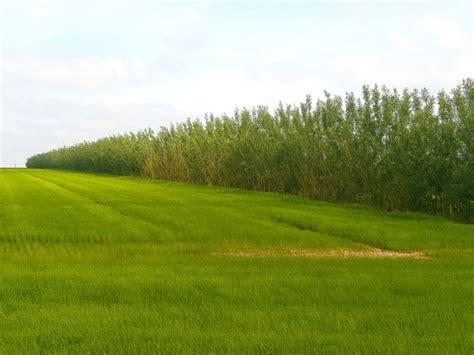 chambre agri 76 bandes ligno cellulosiques rentabiliser la protection de