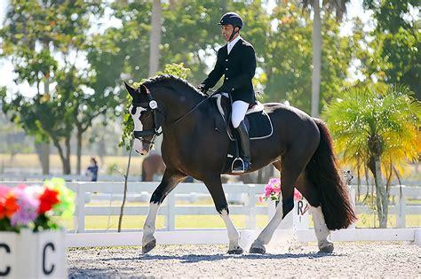 grand champion shire stallion mufasa