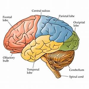 Memory Alzheimer's Dementia Stress