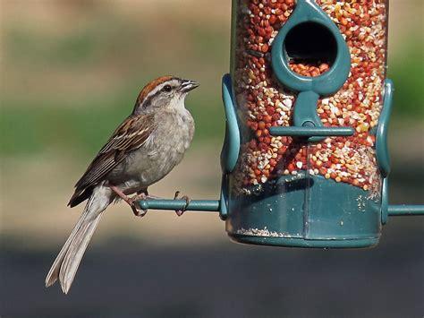backyard birds of north carolina outdoor goods