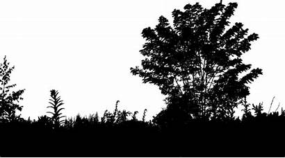 Silhouette Environment Trees Pixabay Sky Ecological Clipart