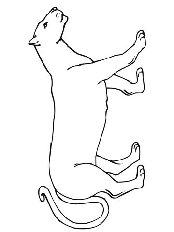 walking mountain lion coloring page  printable coloring pages