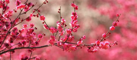 Picture » Spring Blossoms