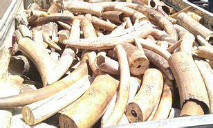 Four men charged with smuggling $7million of rhino horn ...