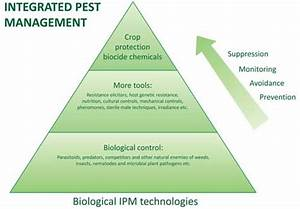 What Is Ipm