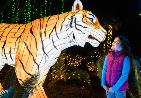 lights zoo angeles wonderland wild