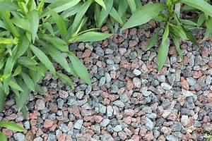 Alternative Zu Kies : ob bodendeckerpflanzen rindenmulch oder kiesbeet anlegen native plants ~ Watch28wear.com Haus und Dekorationen