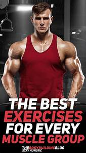 What Are The Best Exercises For Each Muscle Group
