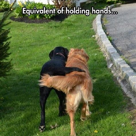 funny dog pictures  perfectly sum    feel