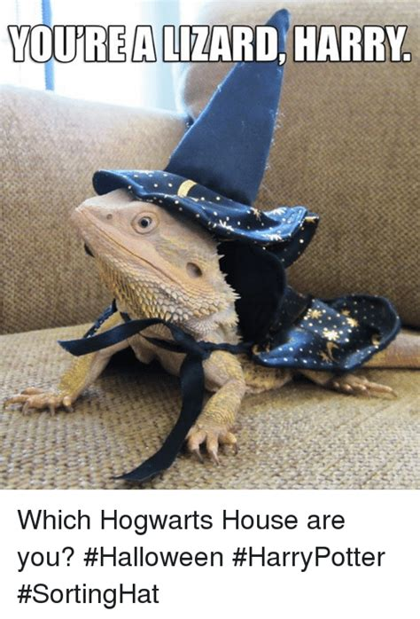 Lizard Meme 25 Best Youre A Lizard Harry Memes Vetted Memes