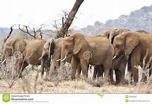 African Elephant In The Wild Stock Photo - Image: 22369260
