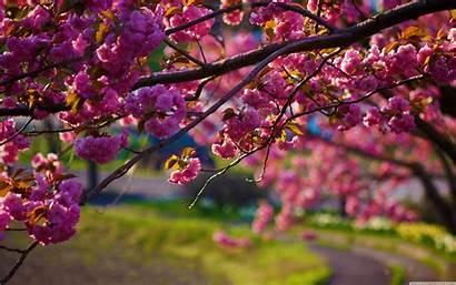 Spring Late Flowers Nature Wallpapers Desktop Winter