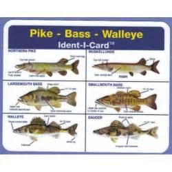 Bass Freshwater Fish Identification Chart