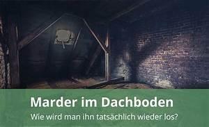 Marder Im Dach Vertreiben : marder im dach gezielt mit marderabwehr vertreiben so geht es ~ Orissabook.com Haus und Dekorationen