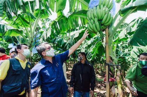 รายงานพิเศษ : เกษตรกรโคราชเฮ!กล้วยหอมทองทำเงิน ส่งขายคิง ...