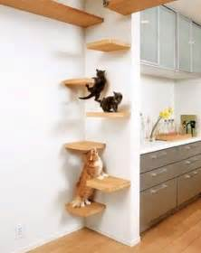 cats in apartments playgrounds for cats in your apartment interior and