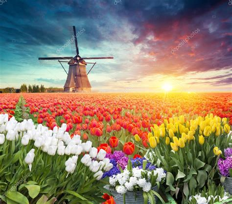 traditional netherlands holland dutch scenery