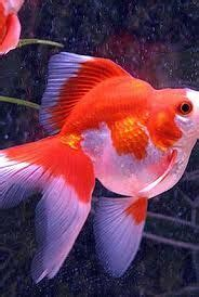 1000 ideas about poisson d aquarium on aquarium fish aquarium and compatibilit 233