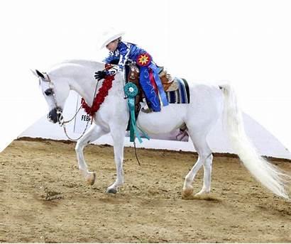 Arabian Horse Foundation Strong