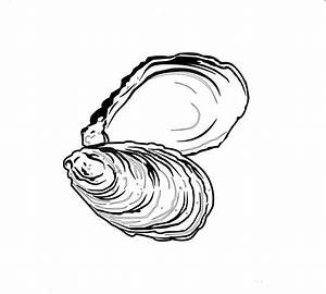 Oyster Shell Clipart (36+)