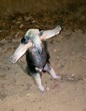 """Wild Anteater Puts Hands Up To """"Surrender"""" To Firefighters ..."""
