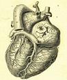 25 best images about Anatomi Organlar/Anatomy Organs on ...