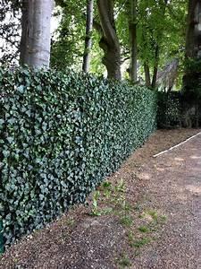 Zaun Abstand Grundstcksgrenze Nachbarschaftsrecht Zaun