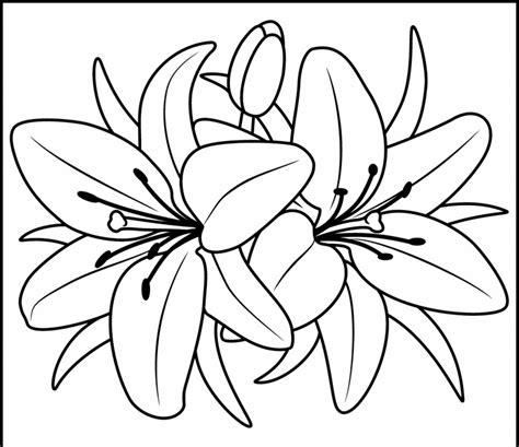 ausmalbilder malvorlagen von lilien kostenlos zum