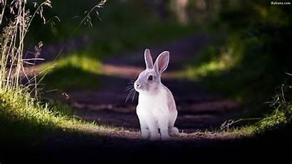 Rabbit Wallpapers Widescreen Backgrounds Baltana 4k