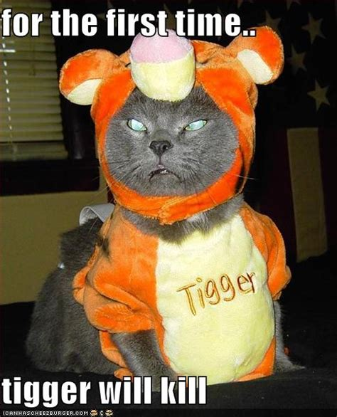 Funny Image Collection Cat Halloween Funny Pics With