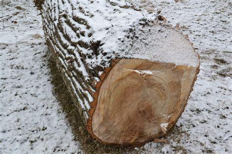 Norisinās publiskā apspriešana par 64 koku ciršanu ...
