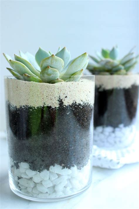 how to care for succulents in pots how to pot care for succulents care for succulent succulent jar diy bedside table layered