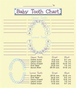Tooth Fairy U0026 39 S Baby Tooth Organizer