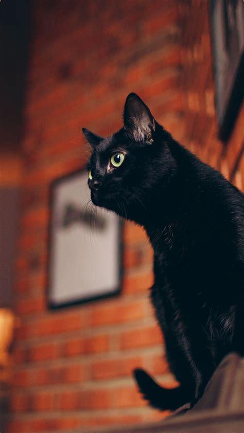 iphone black cat wallpaper in 2020 cat wallpaper black